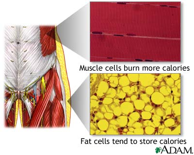 fat-vs-muscle-cells